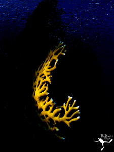 &quot;Fire &amp; Water&quot;